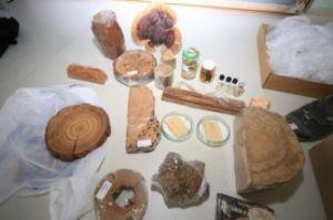 Em uma das fases do curso, os alunos irão as ruas identificar as espécimes dos locais públicos. Foto: Divulgação