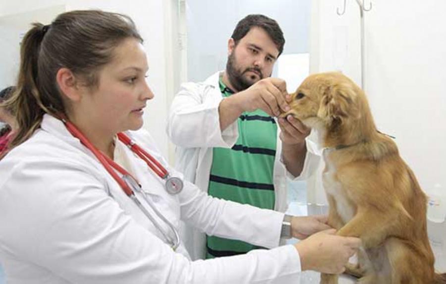 Castrações de animais são feitas gratuitamente por meio de convênio entre a Prefeitura, uma clínica e grupo de protetores de animais. Crédito: Rodrigo Zerneri/PMM