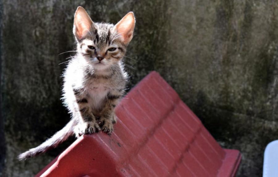 Feira de Adoção de Cães e Gatos. Crédito: Thiago Benedetti