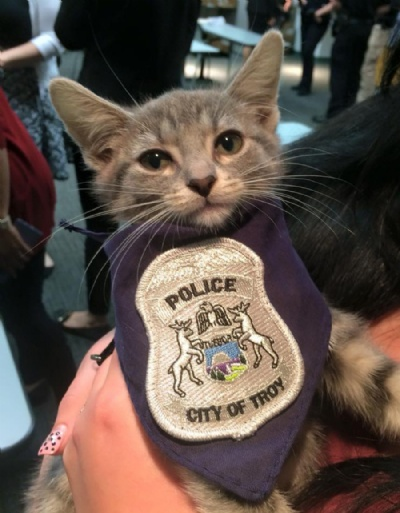 A gatinha Donut (Foto: Troy Police Department)