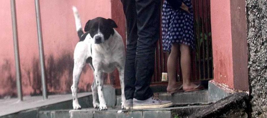 Cidade teve caso de leishmaniose visceral canina; animal funciona como reservatório do parasita. Foto: Nario Barbosa/DGABC